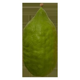מרוקאי